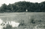 Thumb rice paddy borneo ww2