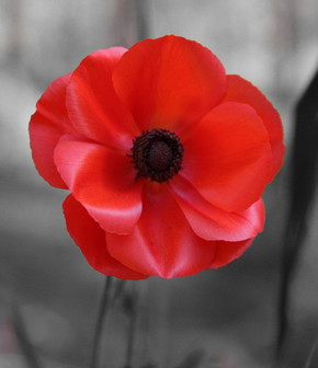 Profile pic zoom a poppy