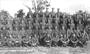 Thumb no.14 platoon  d  co 3rd pioneer battalion. a.i.f