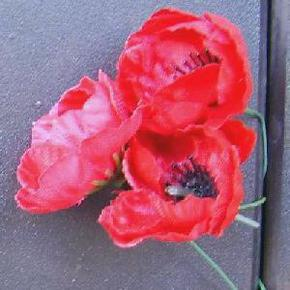 Profile pic poppies on roll of honour awm canberra for 6th wa mounted infantry