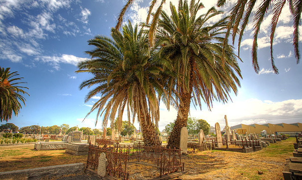 Normal palms footscray cemetery