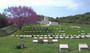 Thumb shrapnel valley cemetery  turkey