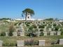 Thumb lone pine cemetery