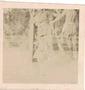 Thumb atherton tablelands  1943