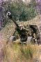 Thumb 220px hamel gun